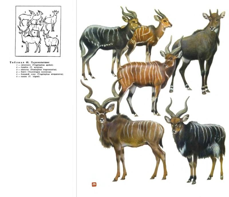 The new Bullyland Okapis 6-tabl10