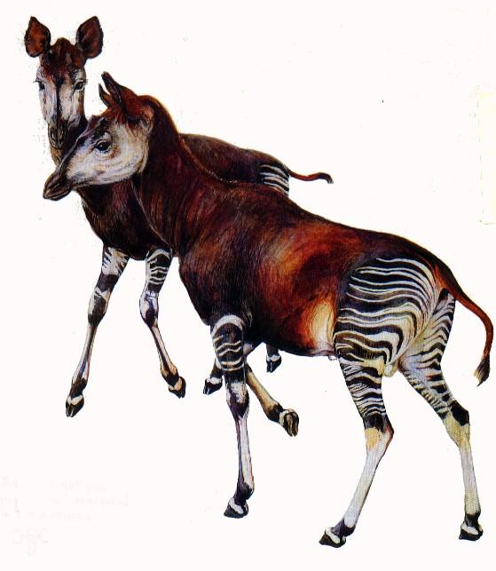 The new Bullyland Okapis Okapi710
