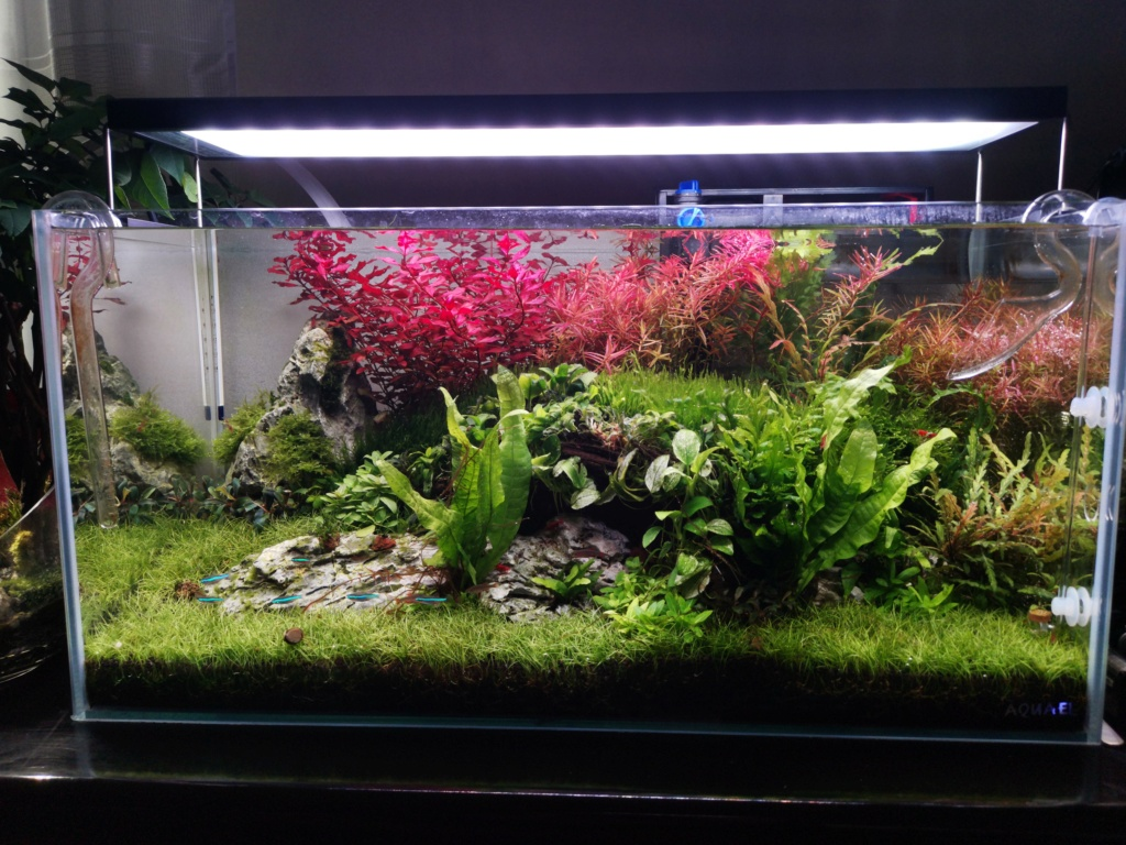 Bac 54L aquascape Img_2015