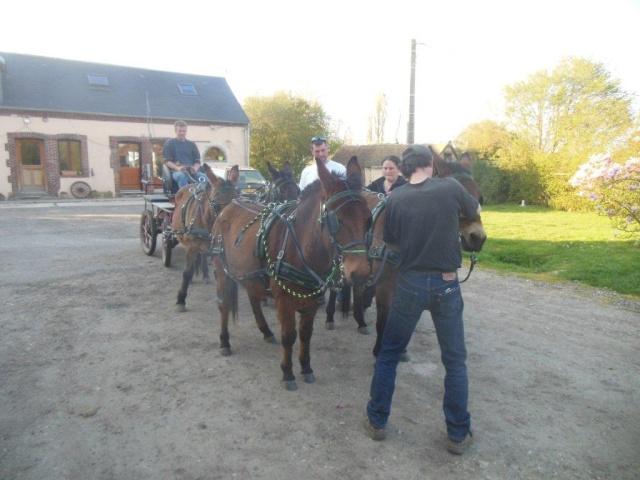 Mon projet d'attelage à 4 mules pas à pas ... Dscn1612