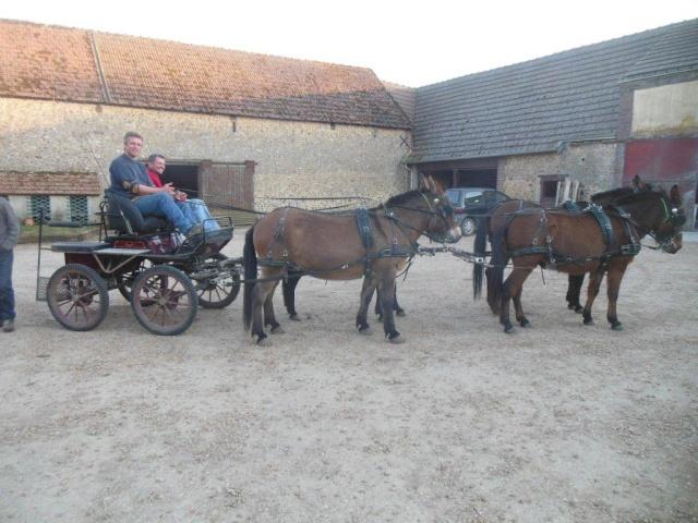Mon projet d'attelage à 4 mules pas à pas ... Dscn1613