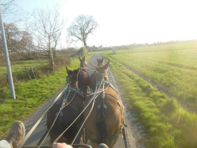 Mon projet d'attelage à 4 mules pas à pas ... Dscn1614