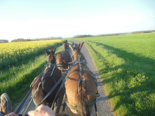 Mon projet d'attelage à 4 mules pas à pas ... Dscn1615
