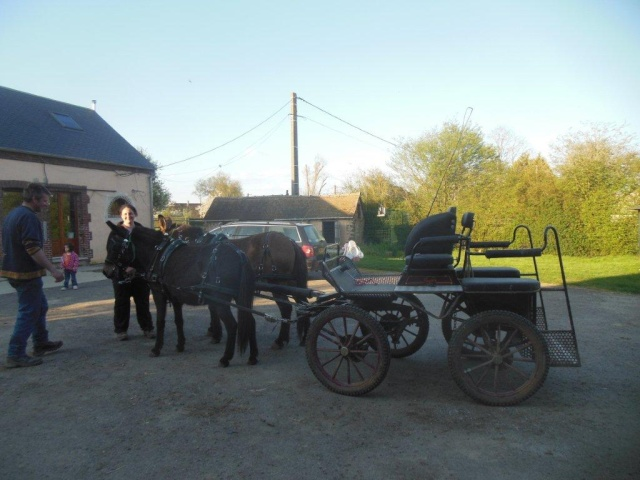 Mon projet d'attelage à 4 mules pas à pas ... Dscn1616