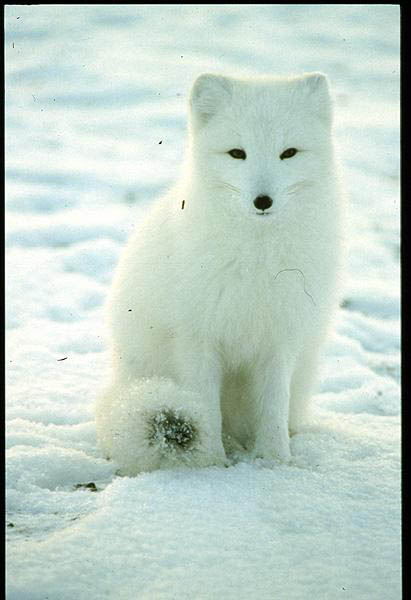 I Spy Arctic10