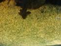 Sable vert Dsc02211