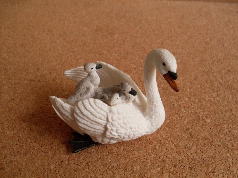 Swan and cygnets Cisne110