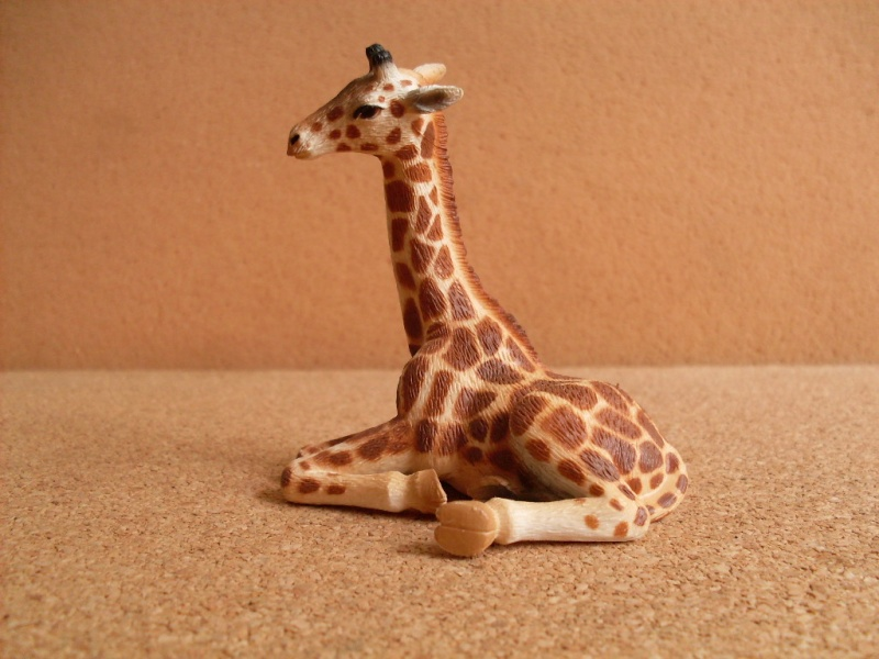 Giraffe Cub and Cockatoo Giraff12