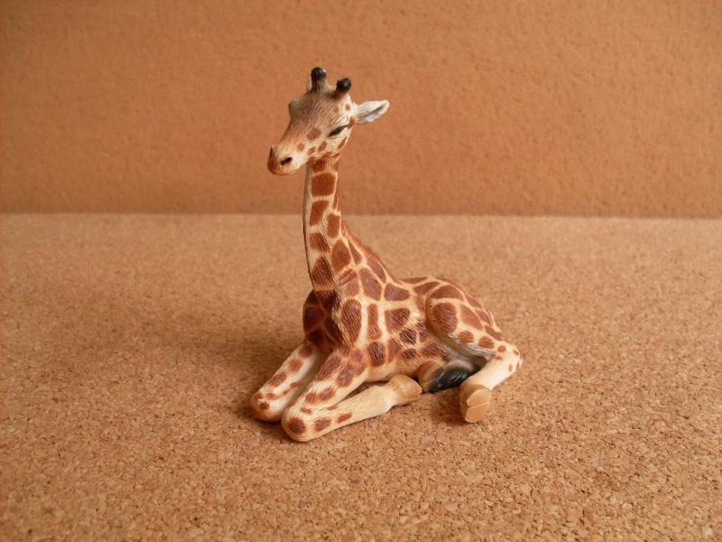 Giraffe Cub and Cockatoo Giraff15