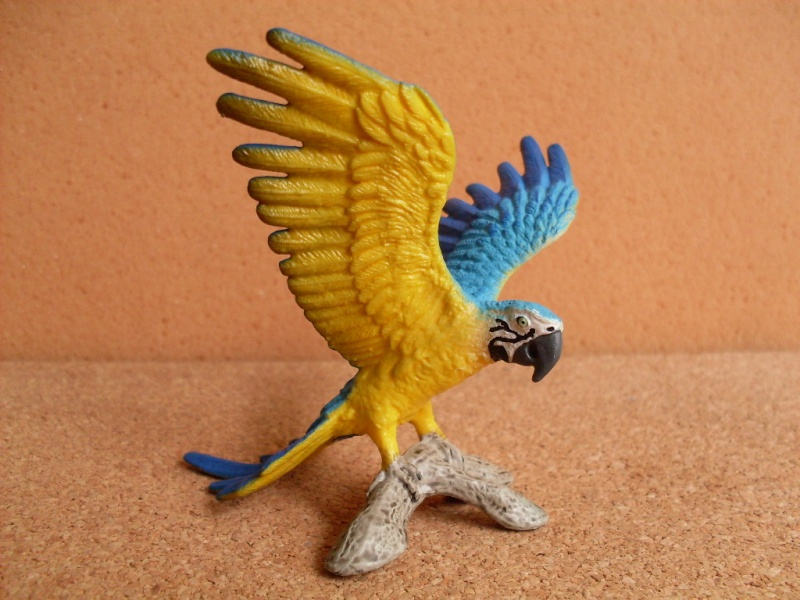 blue and yellow macaw Schlei12
