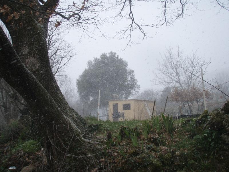 [fabrication] 2 cabanes en l'air reliées entre elles - Page 3 Photo_24