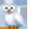 Evcil Hayvan Başvurusu Owl-ic10