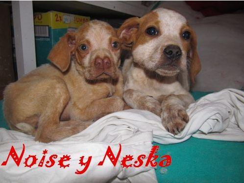 NESKA - en famille d'accueil dans le 77 - SC - VV RP O 511