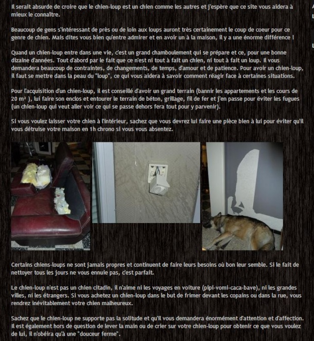 Chien loup Saarloos, installations spécifiques ? - Page 3 Clt10