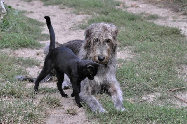 photos de vos chiens et de leurs copains de tous genres  Dsc_5510