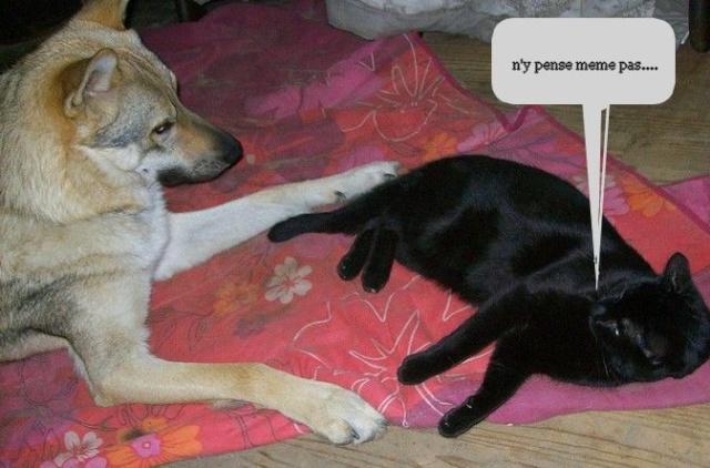 photos de vos chiens et de leurs copains de tous genres  Photos12