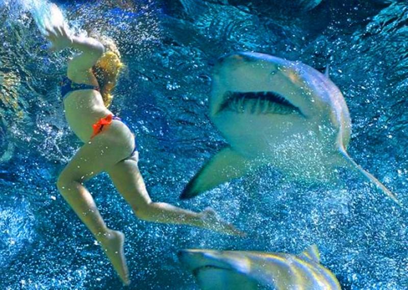 LOTUS ESPRIT #3 - Pagina 2 Shark-10