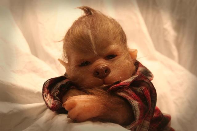 Werepups bébé loup garous 32395410