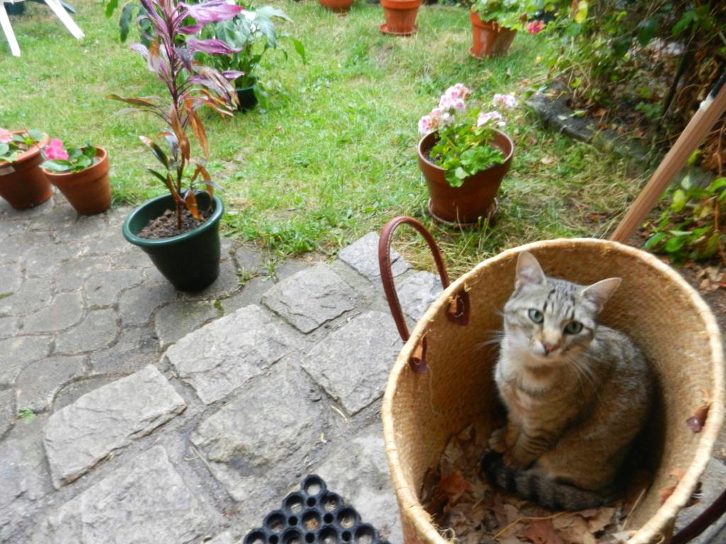Les chats Dscn1410