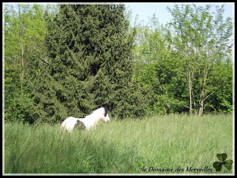 Cillbarra Léo, hongre Irish Cob au Domaine des Merveilles - Page 4 7_mois10
