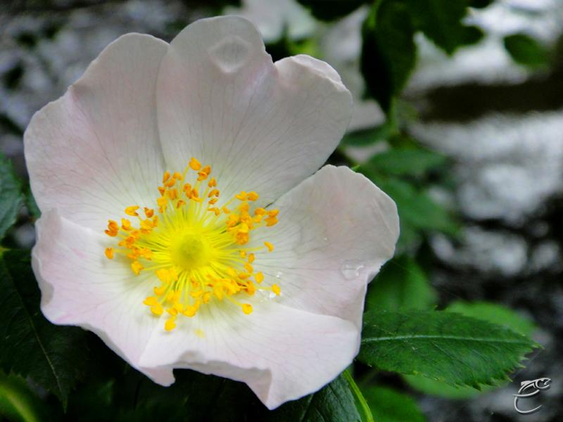 Concours photo du mois de Novembre Fleur10