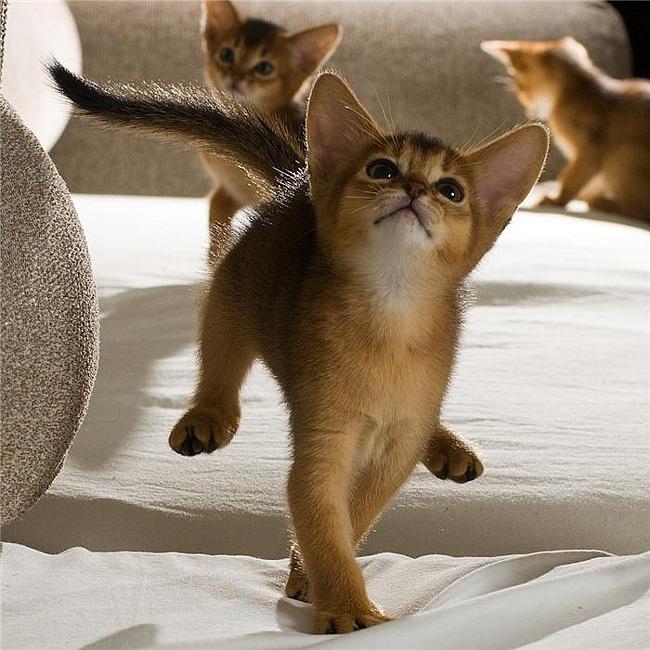 Кошки (Cats) Cats10