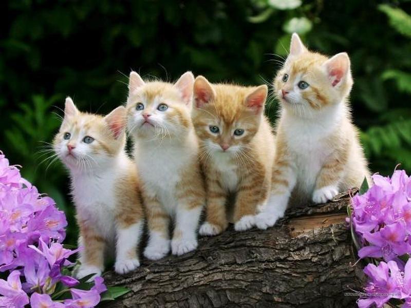 Кошки (Cats) Cats210