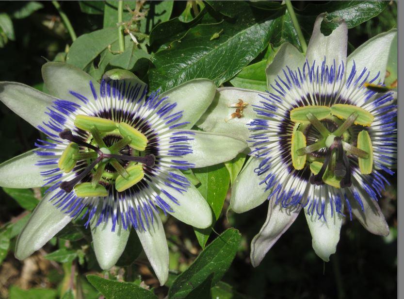 Des fleurs surprises ! Fleurs10