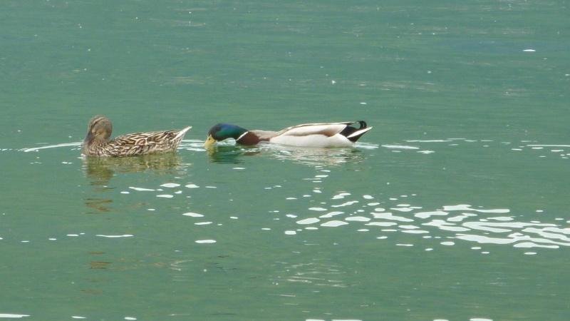 le lac du bourget,photo perso d'hier 003_312