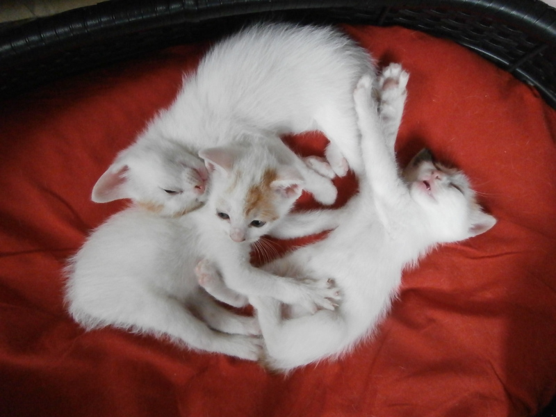 Nos chatons 2013 3_chat10