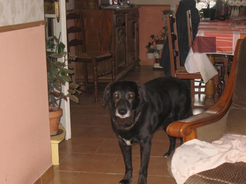 Voici comment mon chien dort ! 01011