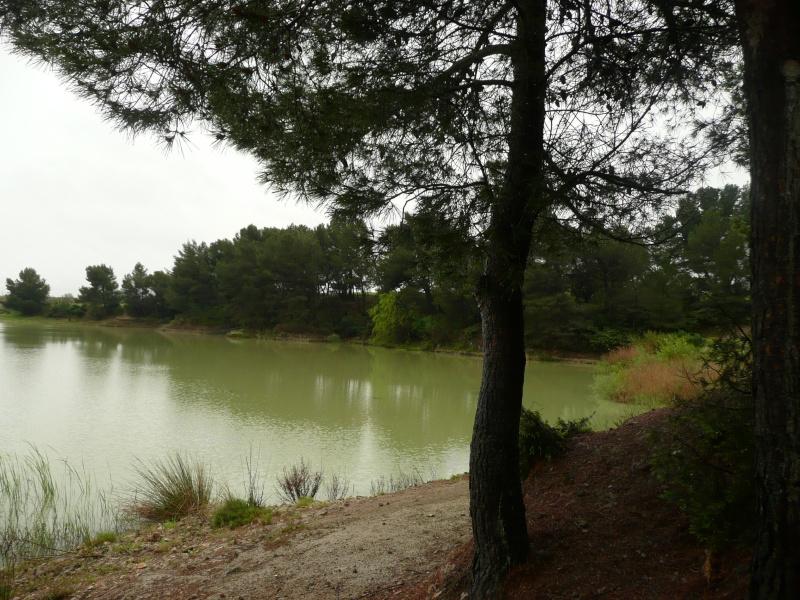 conseils/ infos pour séjour à carcassonne/narbonne/leucate... P1180913