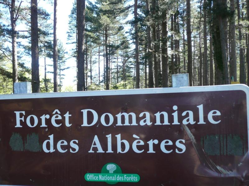 conseils/ infos pour séjour à carcassonne/narbonne/leucate... P1190313