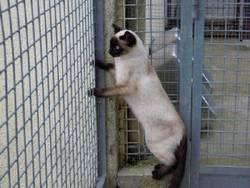 Photos des chats sauvés, avant/après 20850410