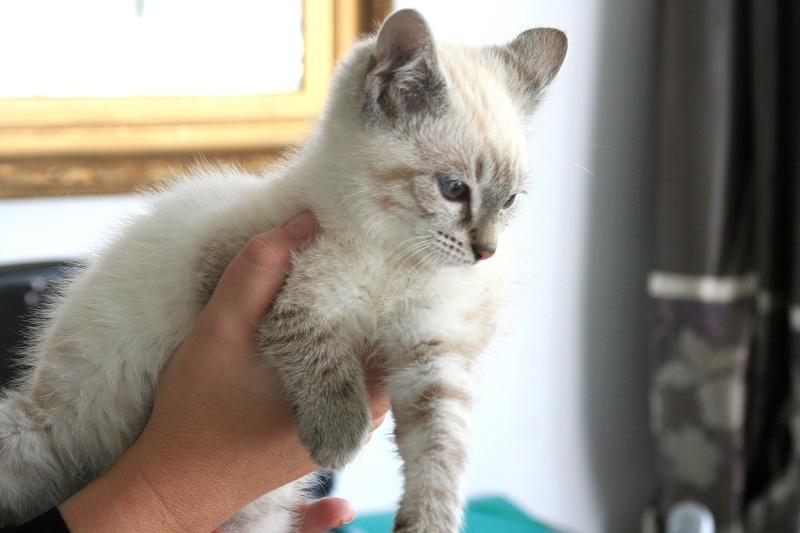 Photos des chats sauvés, avant/après - Page 2 Img_5210