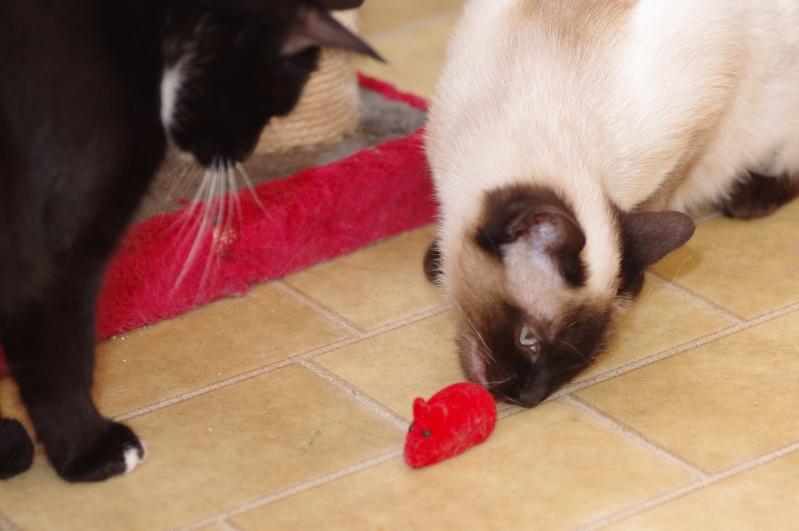 Photos des chats sauvés, avant/après Imgp5515