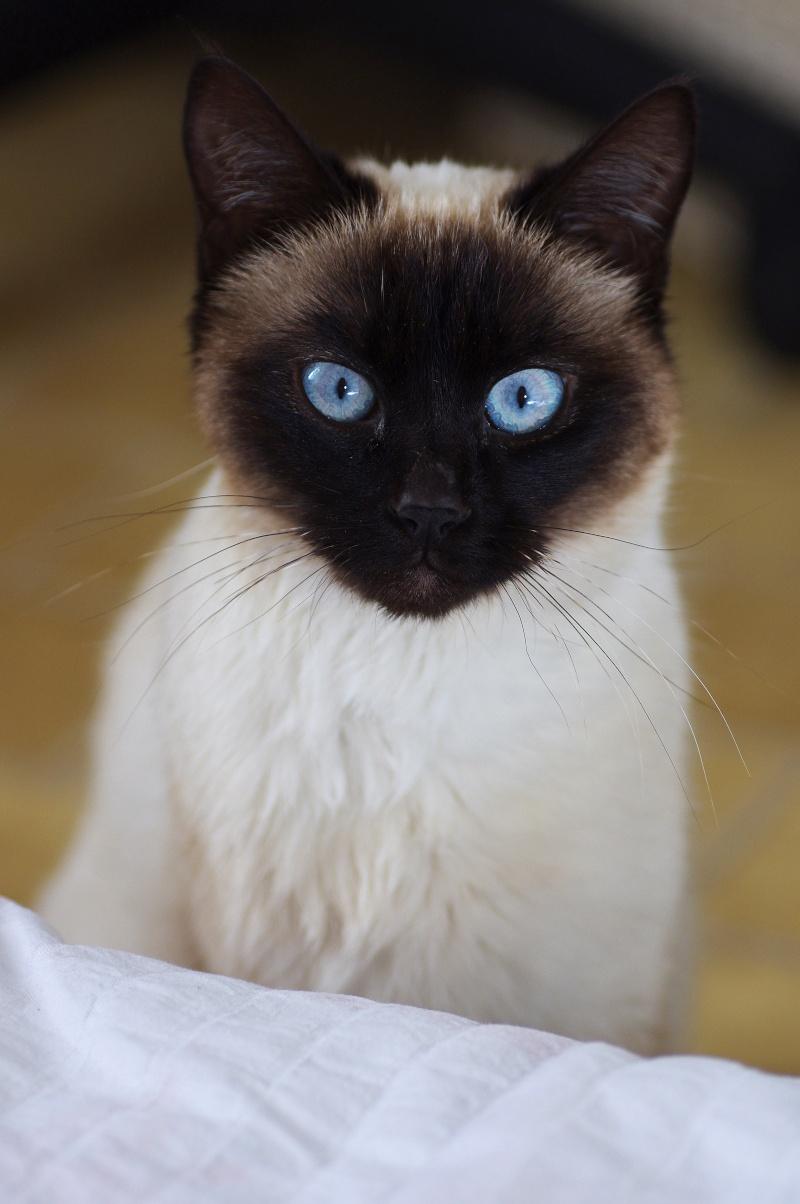 Photos des chats sauvés, avant/après Sookie10