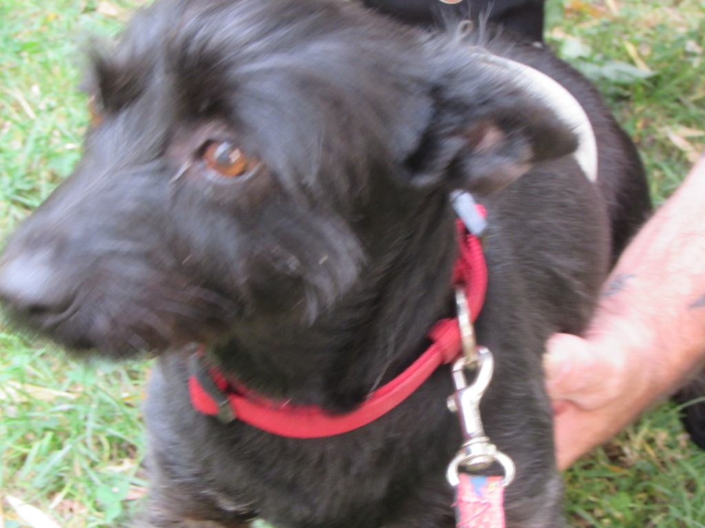 ADOPTION DE LINOU 01621