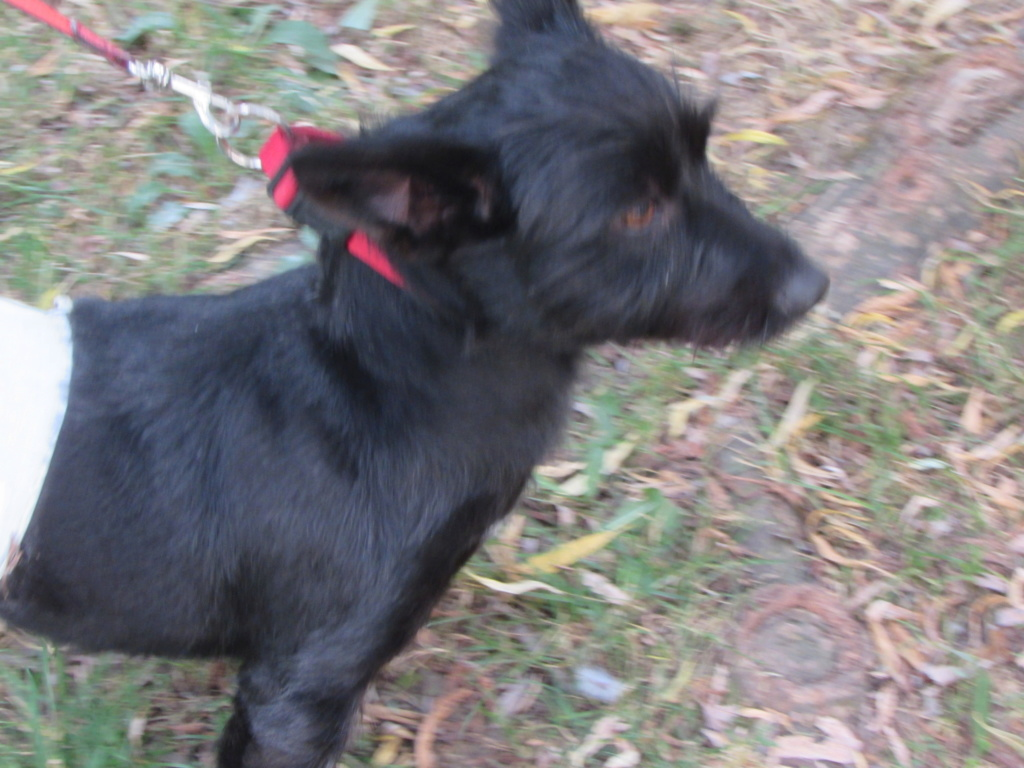 ADOPTION DE LINOU 01720