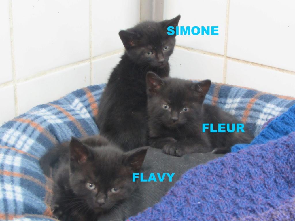 SIMONE - FLEUR - FLAVY 03415
