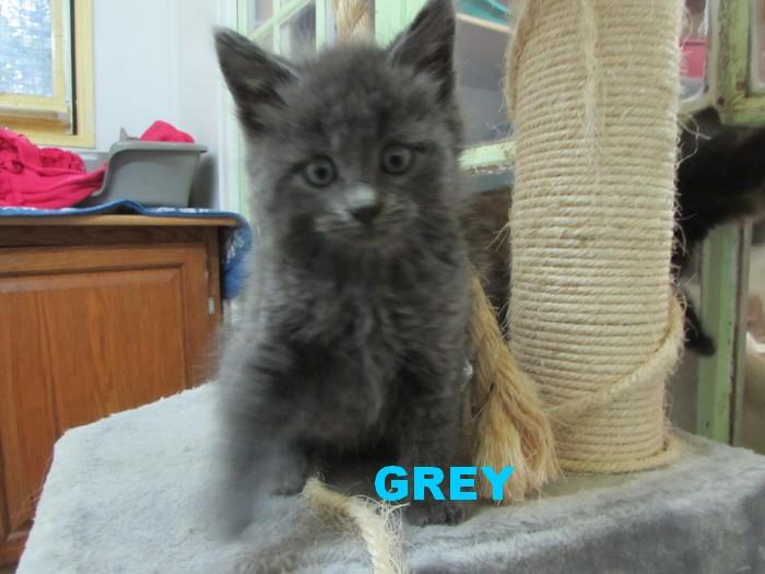 ADOPTION DE GREY 03538