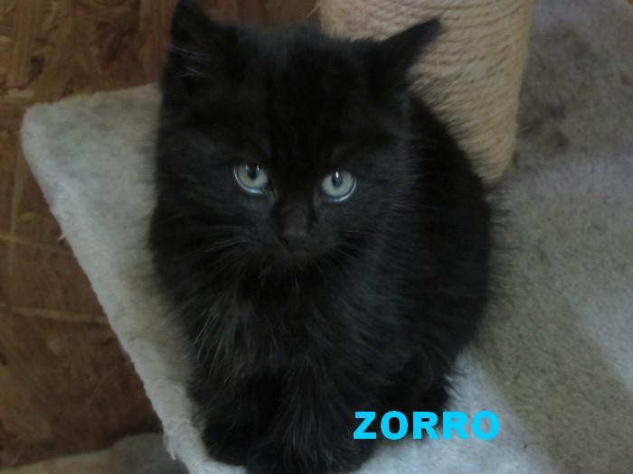 ADOPTION DE ZORRO 03832
