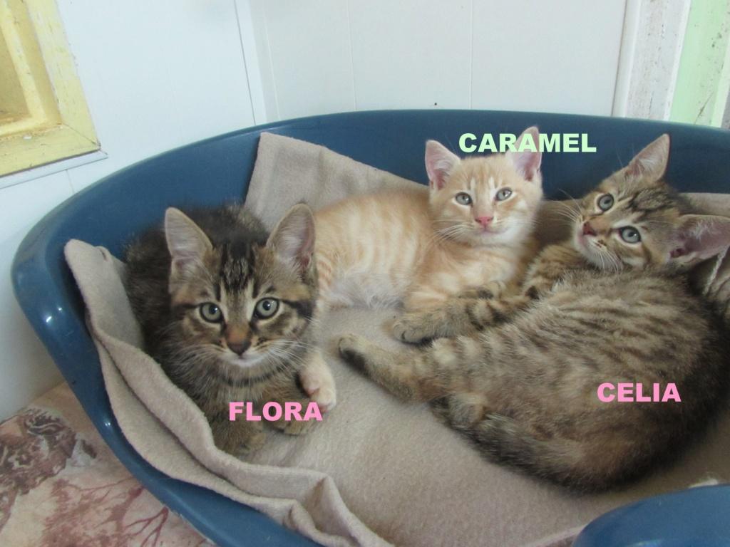 CARAMEL - FLORA - CELIA 05414