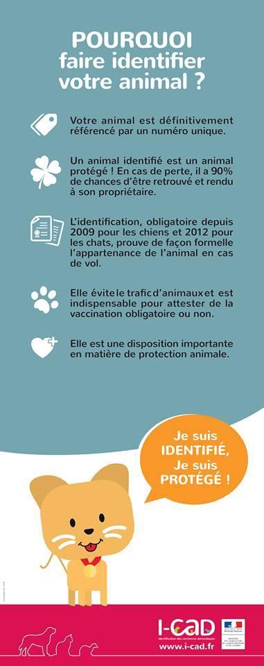 POURQUOI FAIRE IDENTIFIER SON ANIMAL 14199410