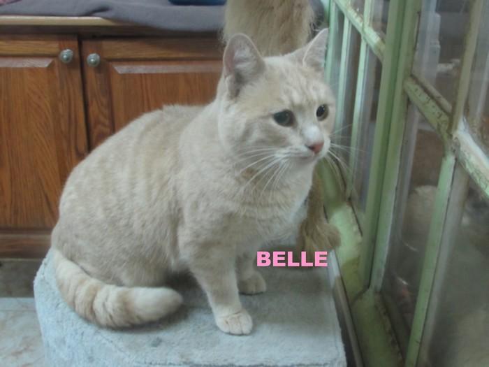 BELLE Belle_12