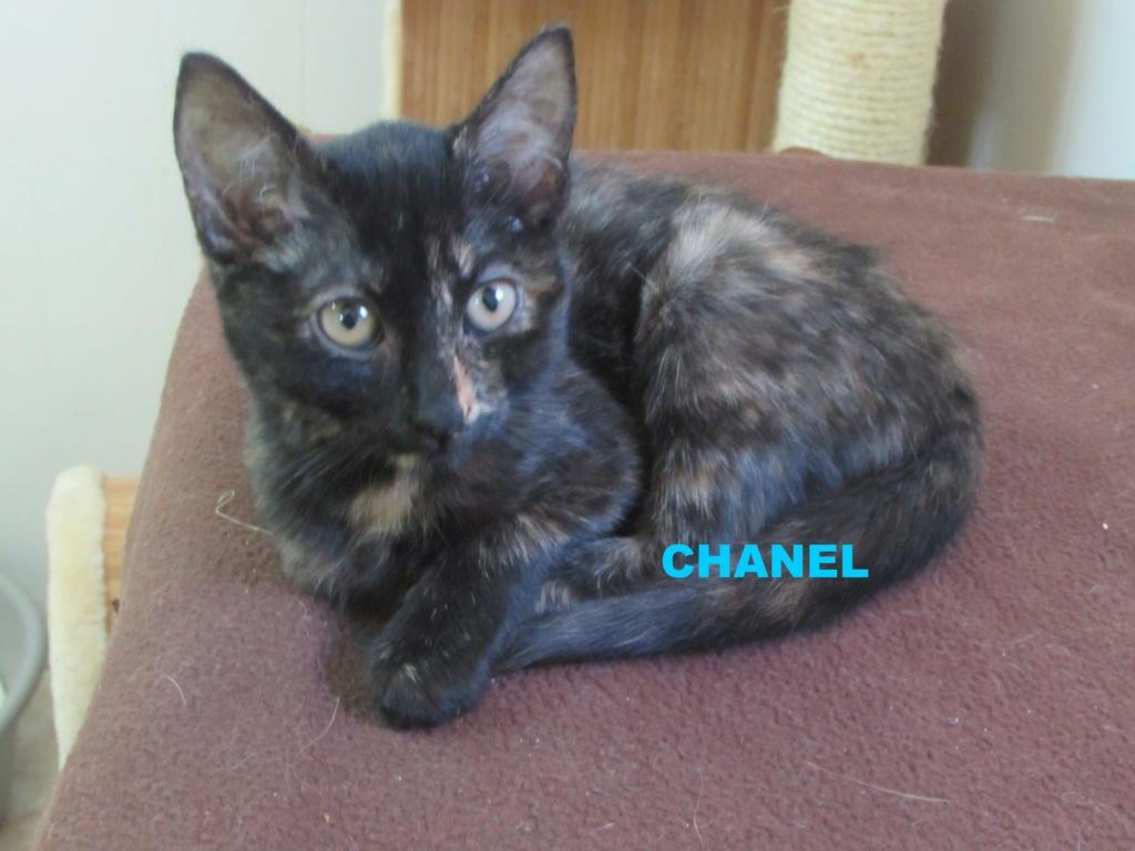 ADOPTION DE CHANEL Chanel10