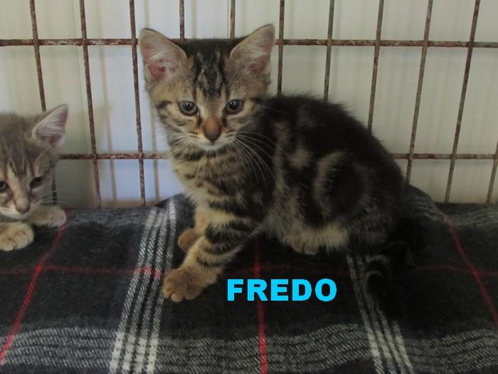 ADOPTION DE FREDO Fredo_10