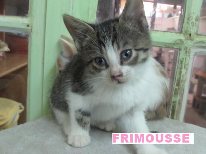 NOUVELLES DE FRIMOUSSE dite RUBY Frimou12