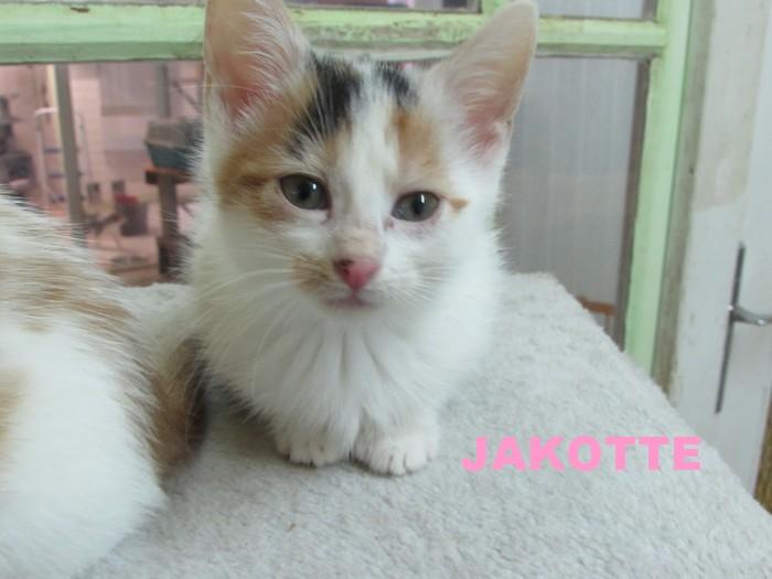 JAKOTTE Jakott11