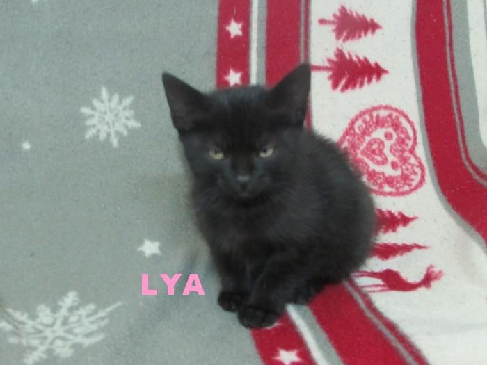 LYA ... Lya_110